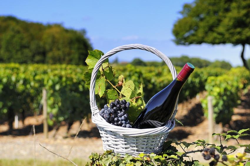 la route des vins la bourgogne